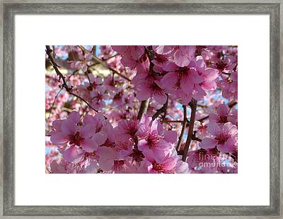 Framed Print featuring the photograph Blossoms by Lydia Holly