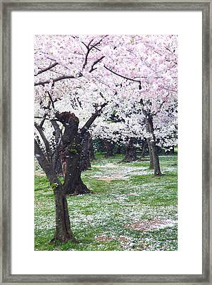 Blossoms Of The Heart Framed Print by Mitch Cat