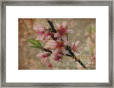 Framed Print featuring the photograph Blossoms by Tamera James