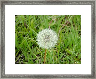Framed Print featuring the photograph Blow A Wish by Wendy McKennon
