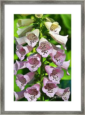 Blow The Trumpet Flora Framed Print