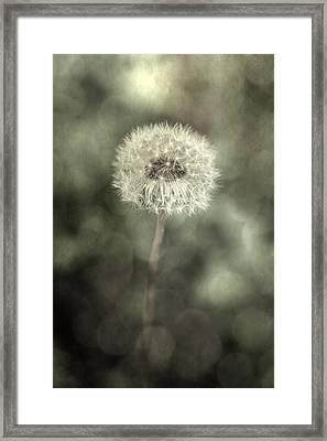 Blowball Framed Print