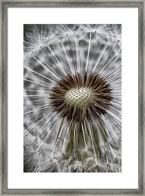 Blowin' Free... Framed Print