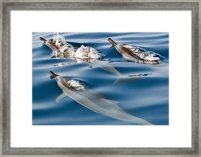 Blowing Bubbles Framed Print by Jim Chamberlain