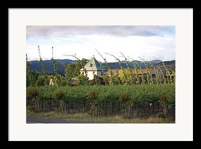 Blowing Grape Vines Vineyards Rustic House Winery Napa California Ca Wine Framed Prints
