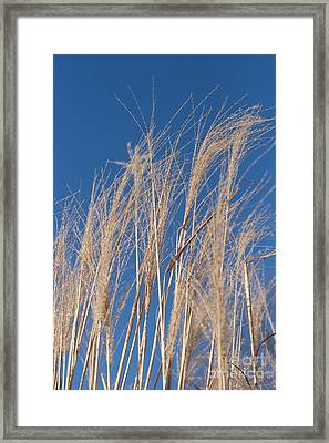 Framed Print featuring the photograph Blowing In The Wind by Barbara McMahon