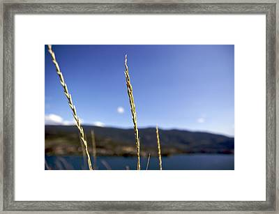 Framed Print featuring the photograph Blowing In The Wind by JM Photography