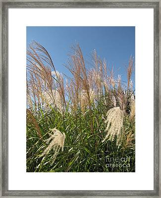 Blowing In The Wind Framed Print by Michelle H