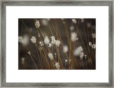 Framed Print featuring the photograph Blowing In The Wind by Vicki Pelham