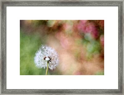 Framed Print featuring the photograph Blown Away by Lynnette Johns