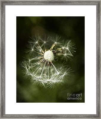Blown Dandelion Framed Print