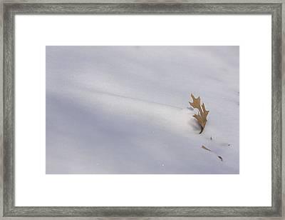 Blown Snow And Oak Leaf Framed Print