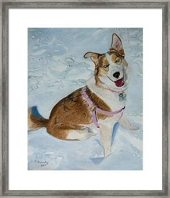 Blue - Siberian Husky Dog Painting Framed Print
