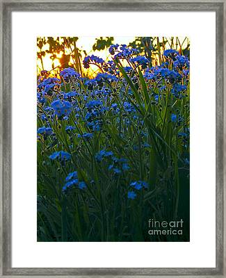 Blue And Gold Framed Print by Trevor Fellows