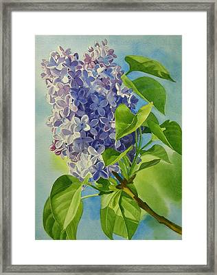 Blue And Lavender Lilacs Framed Print by Sharon Freeman