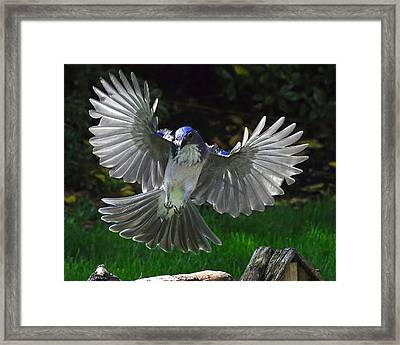 Framed Print featuring the photograph Blue Angel by Jack Moskovita