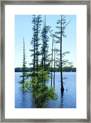 Blue Arkansas Framed Print by Todd Sherlock