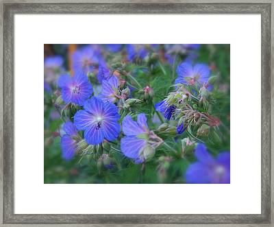 Framed Print featuring the photograph Blue Beauties by Robin Regan
