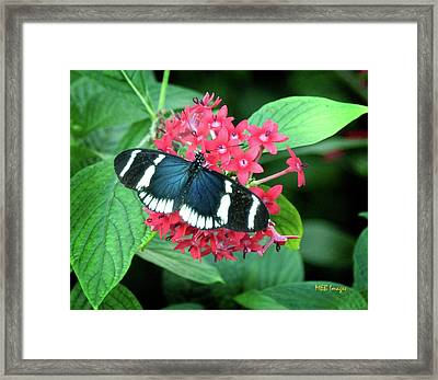 Blue Beauty Framed Print by Margaret Buchanan