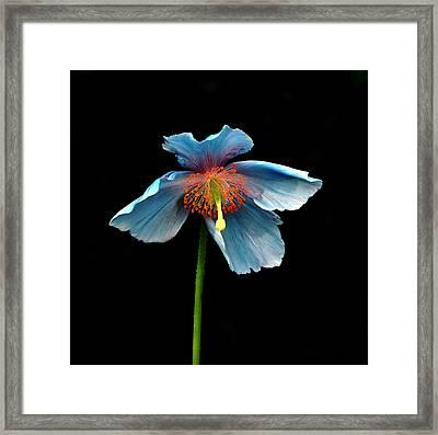 Blue Beauty Framed Print by Richard Ortolano