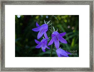 Blue Bells Of Montgomery Creek Framed Print by The Stone Age