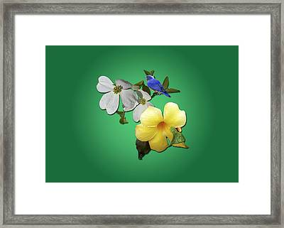 Blue Bird And Blooms Framed Print by Larry Bishop