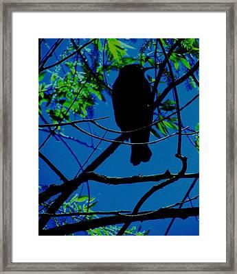 Blue-black-bird Framed Print by Todd Sherlock
