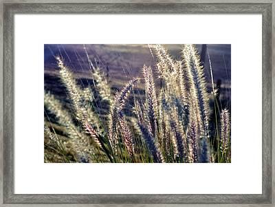 Framed Print featuring the photograph Blue Buffalo Grass by Werner Lehmann