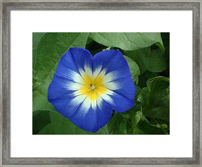 Framed Print featuring the photograph Blue Burst by Bonfire Photography