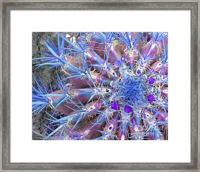 Blue Cactus Framed Print by Rebecca Margraf