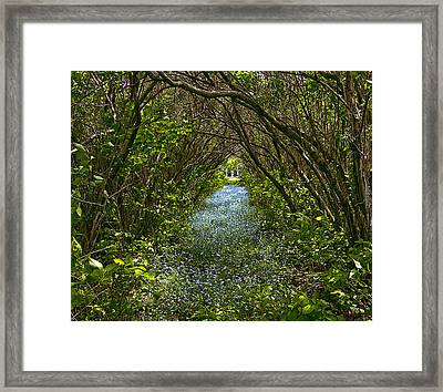 Blue Carpet In The Woods. Framed Print