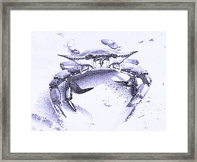 Blue Crab  Framed Print by Betsy Knapp