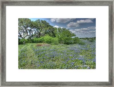 Blue Creek Framed Print by Will Cardoso