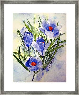 Blue Crocus In The Snow Framed Print by Joann Perry