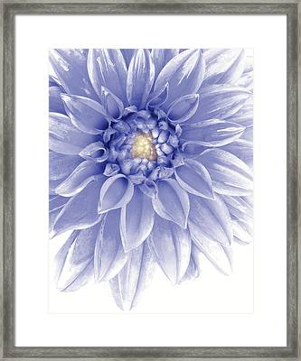 Blue Dahlia Framed Print