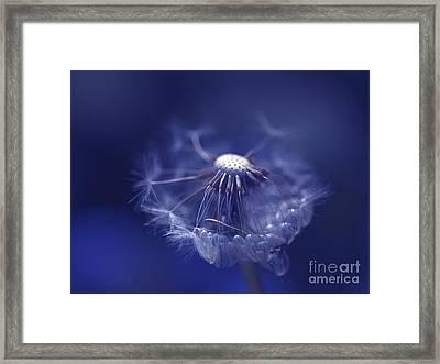 Blue Dandy Framed Print by Sharon Talson