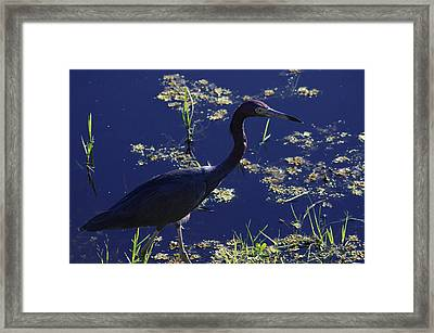 Blue Framed Print by Don Youngclaus