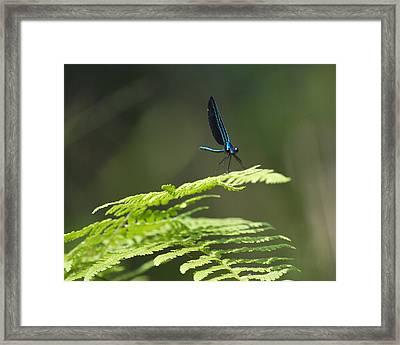 Blue Dragon Framed Print by Al Cash