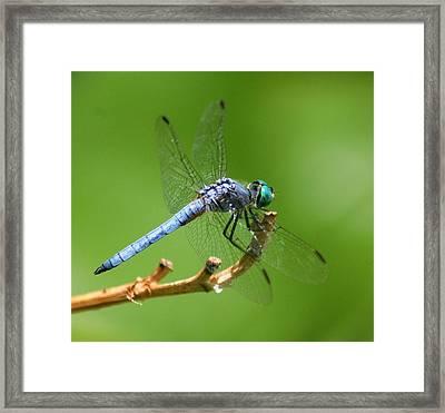 Blue Dragonfly Start Up Framed Print by Meeli Sonn