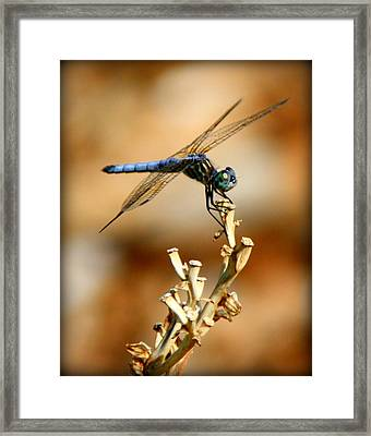 Blue Dragonfly Framed Print by Tam Graff