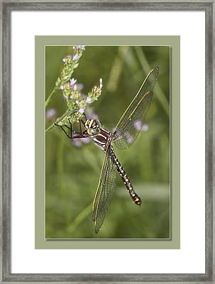 Framed Print featuring the digital art Blue Eyes by Kevin Chippindall