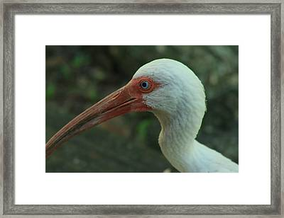 Blue Eyes Framed Print by Sean Green