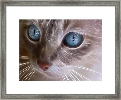 Blue Eyes Framed Print