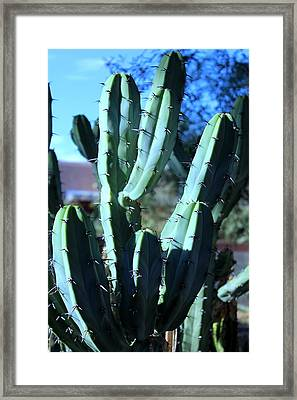 Blue Flame Cactus Framed Print by M Diane Bonaparte