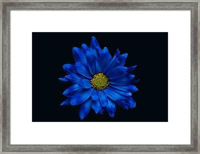 Blue Flower Framed Print by Ron Smith