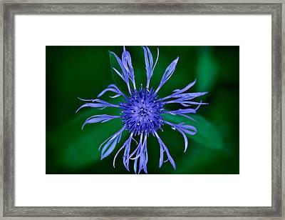 Blue Flower Framed Print