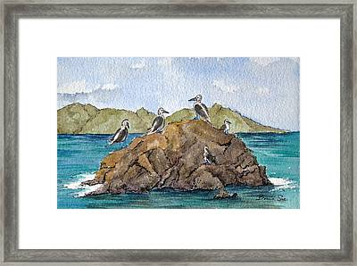 Blue Footed Boobies In Galapagos Framed Print by Bonnie Sue Schwartz