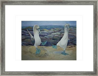 Blue Footed Booby's Mating Dance Framed Print by Carmen Durden