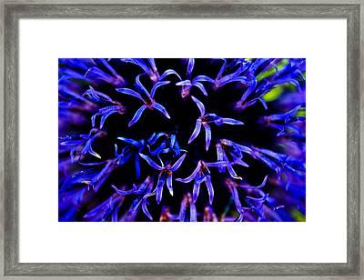 Blue Forest Framed Print by Joshua Dwyer