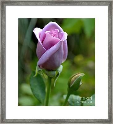 Blue Girl Rose-03 Framed Print by Eva Thomas